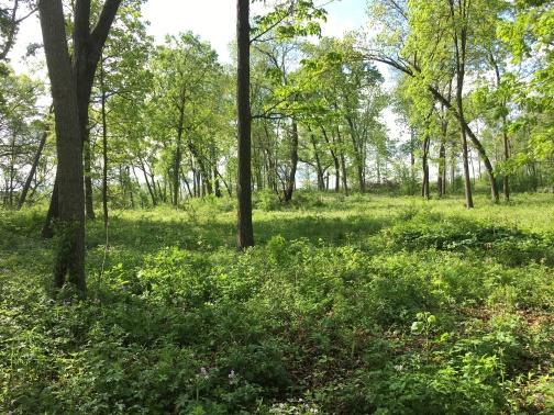 Cherokee Marsh, North Unit, Madison, WI