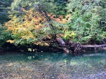 Grove of the Patriarchs, Mount Rainier National Park